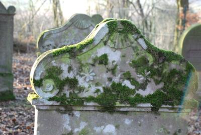 060108_niedenstein_judfriedhof-025_400pix.jpg
