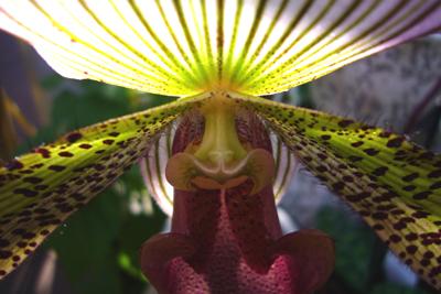 110208_meckelburg_orchideen-005_400pix.jpg