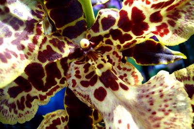 110208_meckelburg_orchideen-056_400pix.jpg