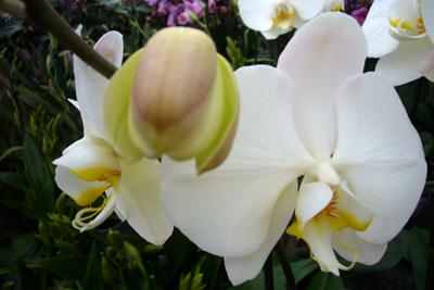 150208_orchideen-069_400pix.jpg