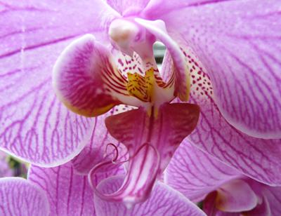 250408_ks_jud-friedhof_orchideen_fz-18-005_400pix.jpg