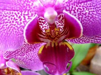 250408_ks_jud-friedhof_orchideen_fz-18-016_400pix.jpg