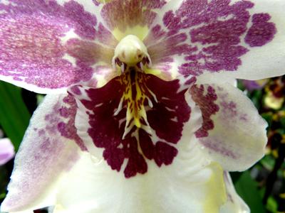 250408_ks_jud-friedhof_orchideen_fz-18-033_400pix.jpg