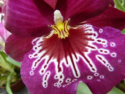 250408_ks_jud-friedhof_orchideen_fz-18-040_400pix.jpg