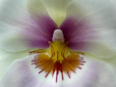 250408_ks_jud-friedhof_orchideen_fz-18-042_400pix.jpg