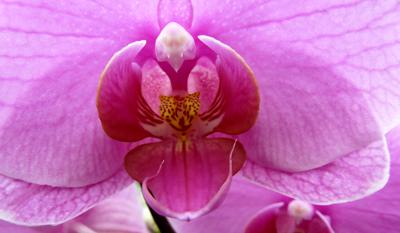 250408_ks_jud-friedhof_orchideen_fz-18-070_400pix.jpg