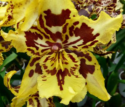 250408_ks_jud-friedhof_orchideen_fz-18-072_400pix.jpg