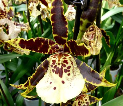 250408_ks_jud-friedhof_orchideen_fz-18-075_400pix.jpg