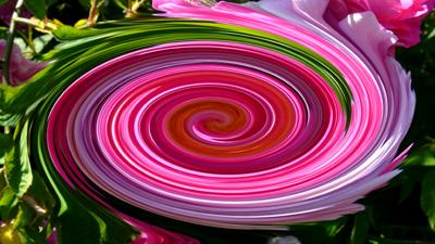 100608__rosarium-sangerhausen-ii-112_strudel_400pix.jpg