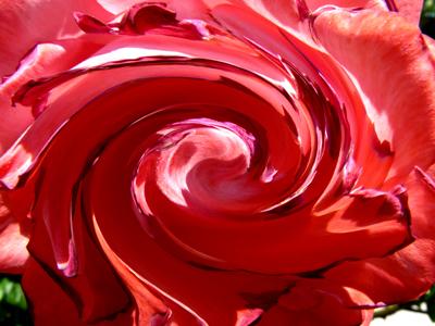 100608__rosarium-sangerhausen-ii-306_strudel_400pix.jpg