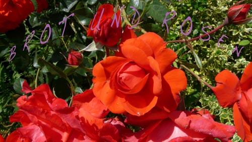 BROT UND ROSEN_08.03.2011_021