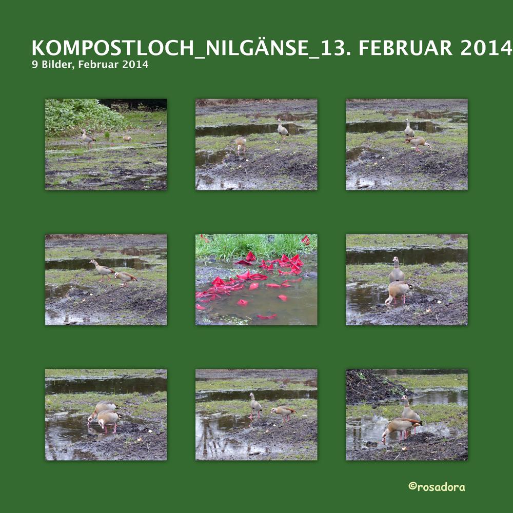 KOMPOSTLOCH_NILGÄNSE_131