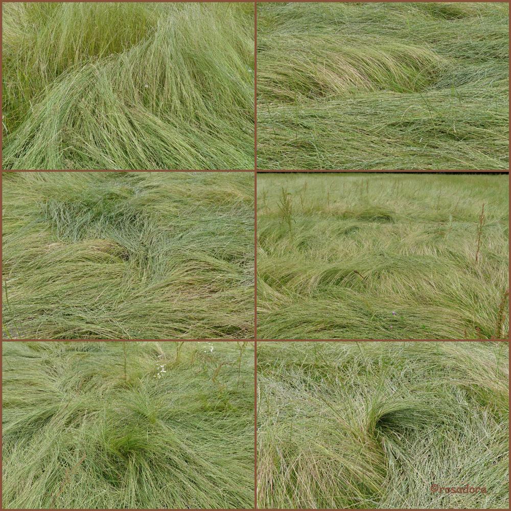 GRAS 15.06