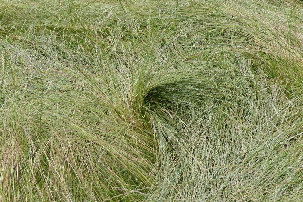 GRAS I_P1100601