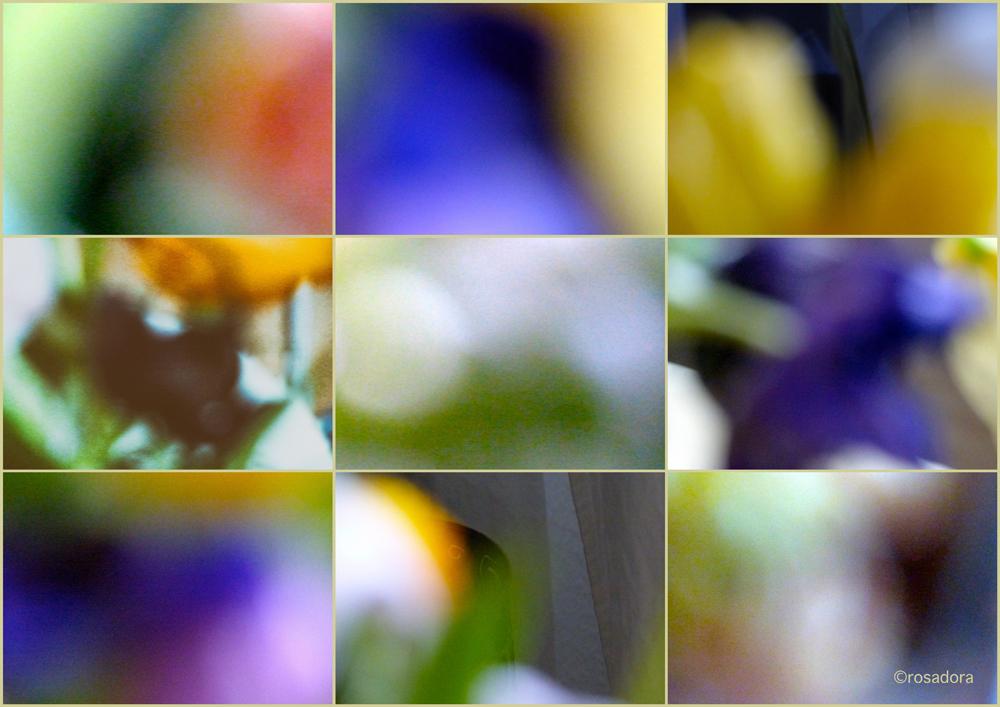 GEB. STRAUSS_farbverläufe__17.021