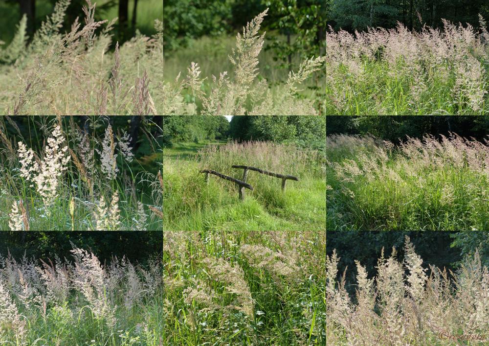 GRAS HOHES REINHARDSWALD_26.072_bearbeitet-1